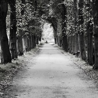 Avenue, Trees, Woman, Away, Road, Hemming, Trellis