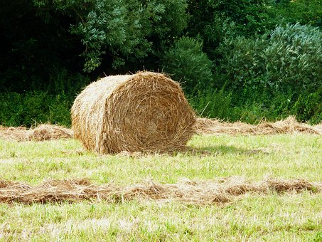 Harvested, Arable, Agriculture, Agricultural, Bale