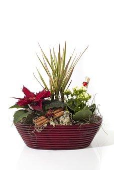 Christmas, Julgrupp, Christmas Flower, December, Feast