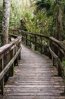 Path, Bridge, Nature, Way, Forest, Green, Pathway