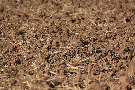 Stubble, Harvested, Dirt