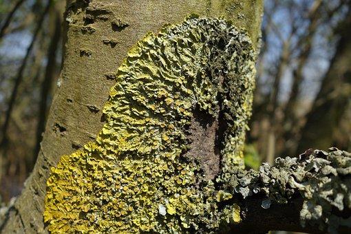 Lichen, Moss, Tree Trunk, Nature, Green, Yellow