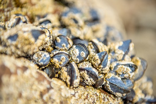 Open Shell, Quiet, Beautiful, Detail, Shell, Stone