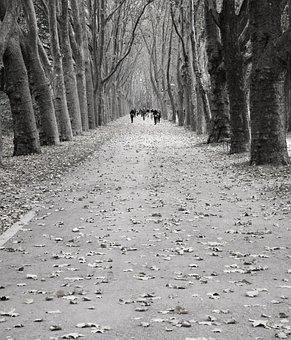 Avenue, Trees, Human, Away, Road, Hemming, Trellis