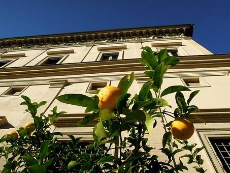 Building, Rome, Italy, Lemon, Tree, Lemon Tree, Plant