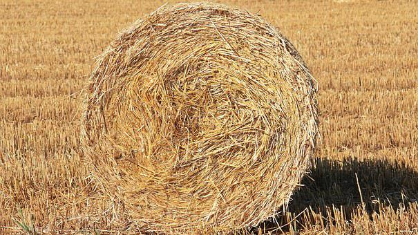 Straw Role, Harvest, Straw, Agriculture, Round Bales