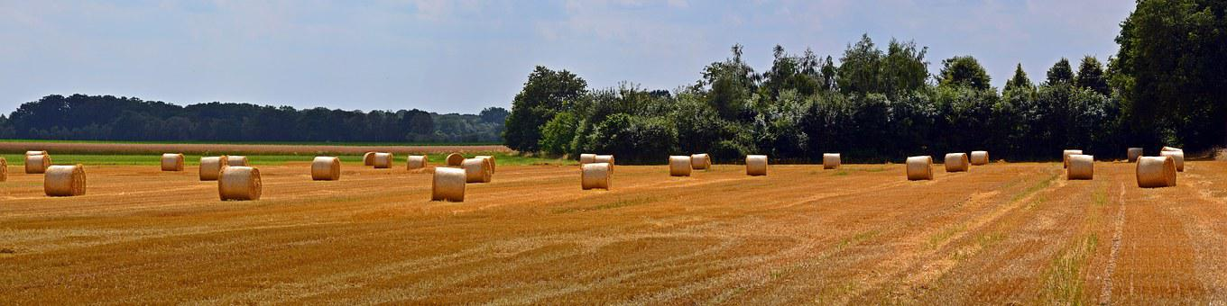 Straw Bales, Panorama, Round Bales, Agriculture, Straw