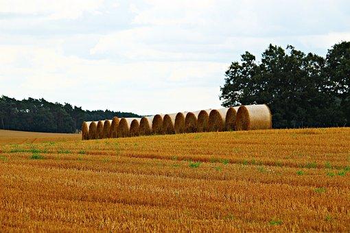 Straw Bales, Straw, Field, Harvest, Landscape, Summer