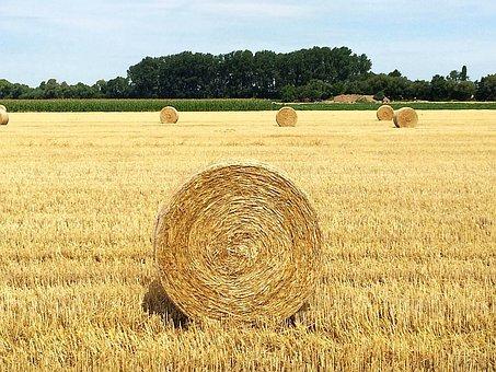 Straw, Straw Bales, Round Bales, Straw Box, Stubble