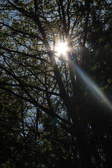 Sun, Forest, Grove, Flurry, Flooded, Sunbeam, Nature