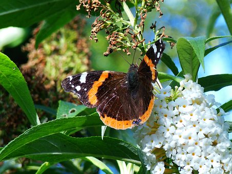 Butterfly, Transformation, Bug, Papilion, Fauna, Nature
