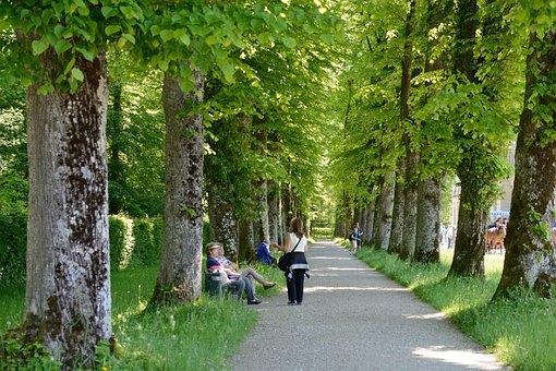 Tree Lined Avenue, Human, Trees, Leaf Roof, Avenue