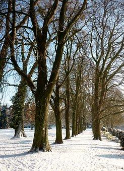 Winter, Snow, Trees, Tree Lined Avenue, Park, Ratingen