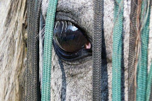 Horse, Eye, Saddle-cloth, View, Algae, White, Head