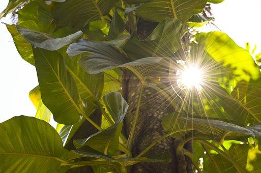 Vine, Leaves, Lens, Flare, Sunlight, Sun, Burst, Plant
