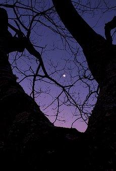 Nightsky, Prayer, Dream, Sky, Night, Alone, Countdown