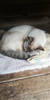 Sleeping, Cat, Animal