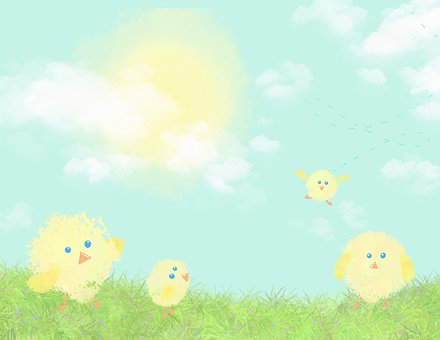 Chicks, Chickens, Yellow, Easter, Bird, Poultry, Animal