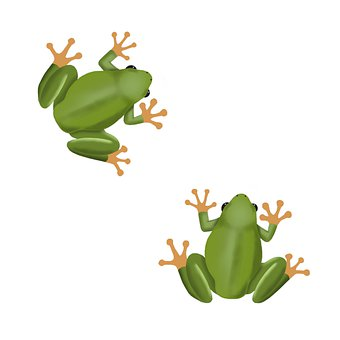 Frog, Toad, Amphibian, Couple, Animals, Fauna