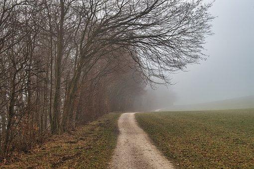 Forest, Trail, Fog, Field, Meadow, Autumn, Fall, Foggy