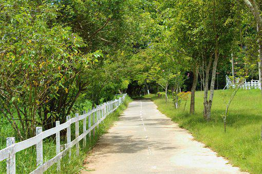 Landscape, Road, Path, Nature, Forest, Street, Paving