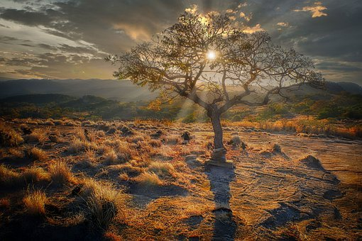 Sunset, Tree, Grasses, Meadow, Sun, Evening Sun