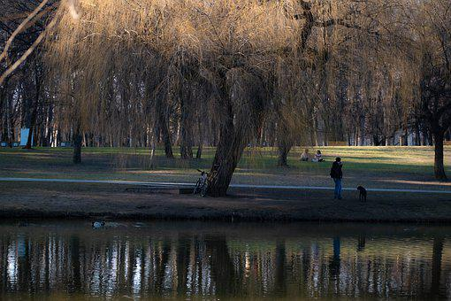 Park, Tree, Nature, Grass, Water, Peace, Peaceful