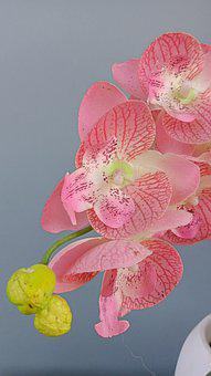 Orchid, Orchid Flower, Pink, Tree, Flower, Flower Crown