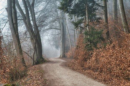 Forest, Trail, Fog, Autumn, Fall, Foggy, Path