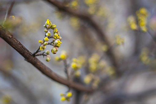 Branch, Buds, Spring, Bush, Sprout, Tree, Plant, Garden