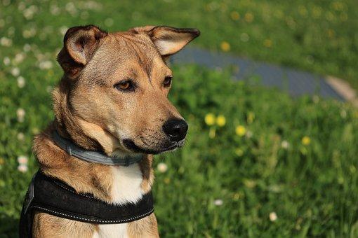 Dog, Look, Pet, Portrait, Attention, Muzzle, Looking