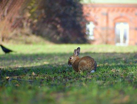 Hare, Bunny, Rabbit, Spring, Wild Animal, Nature, Fauna