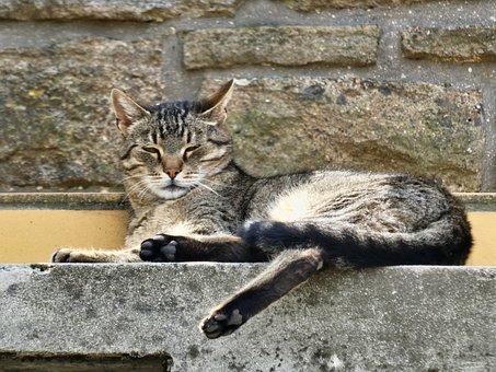 Cat, Tabby, Sleepy, Relax, Pet, Feline, Domestic