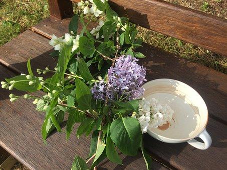 Spring, Garden, Flowers, Plant, Flora, Rest, Relaxation