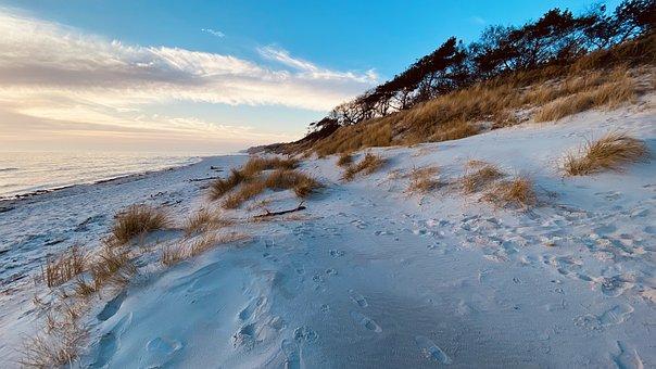 Beach, Coast, Sand, Dunes, Seashore, Coastline, Grasses
