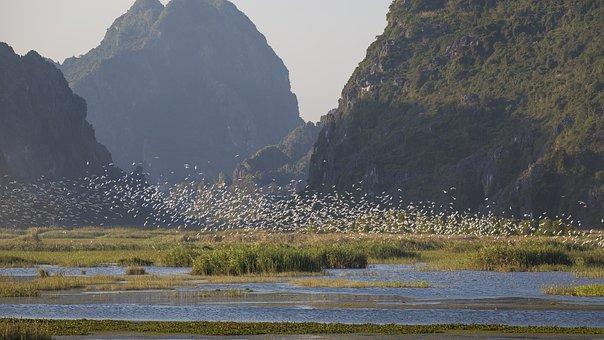 Birds, Lagoon, Mountains, Flying, Storks, Animals