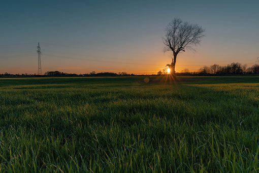 Sunset, Field, Tree, Grass, Meadow, Nature, Sky, Dusk