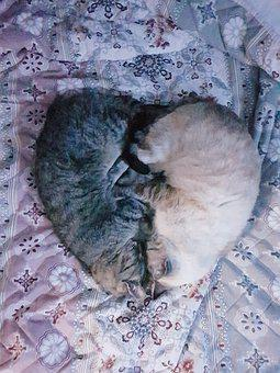 Heart, Cats, Sleep, Sleeping, Shape, Together, Soulmate
