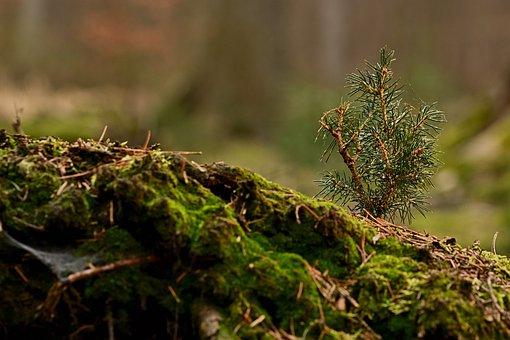 Moss, Wood, Forest, Tree Stump, Seedling, Forest Floor