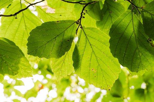 Tree, Texture, Nature, Pattern, Plant, Sun, Light