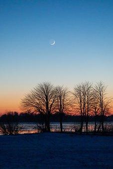 Trees, Silhouettes, Moonrise, Dusk, Twilight