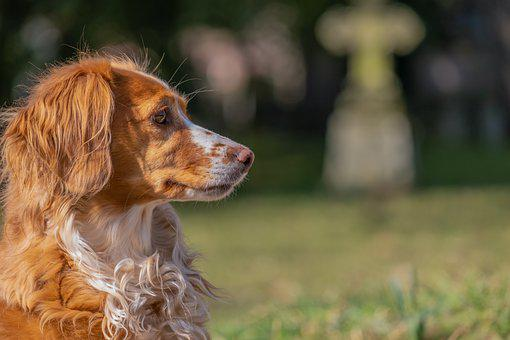 Dog, Sad, Wait, Cemetery, Waiting, Animal, Pet, Lonely