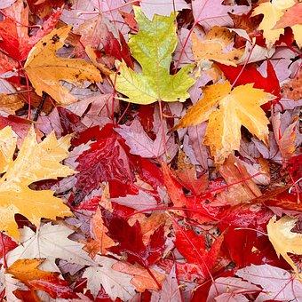 Fall, Leaves, Aut, Autumn, Nature, Forest, Foliage