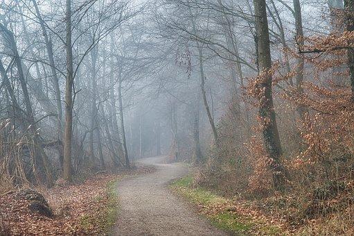 Autumn, Fog, Foggy, Forest Path, Forest, Trees, Away