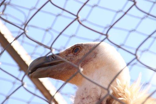 Zoo, Wildlife, Bird, Predator, Fauna, Animal, Captivity