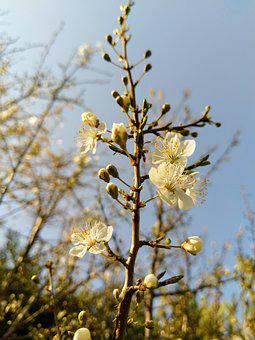 Spring, Flower, Faye, Floral Branch, Buds, Gems, Gemma