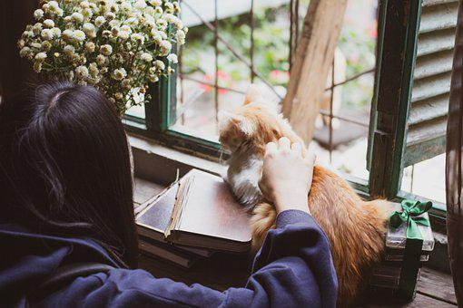 Cat, Flower, Window