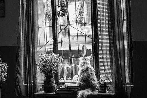 Cat, Window, Flower