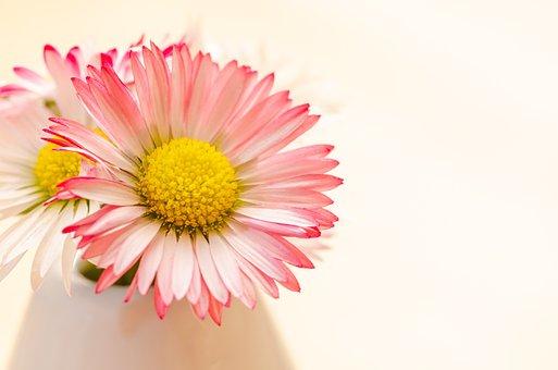Daisies, Flowers, Bouquet, Petals, Floral Arrangement