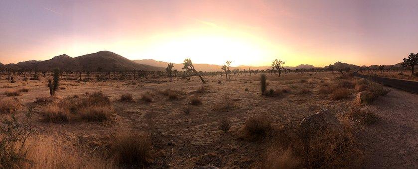 California, Desert, Joshua Tree, Sunset